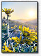 Balsamroot Sunshine