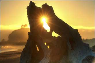 Sunburst through driftwood on the coast of the Olympic Peninsula