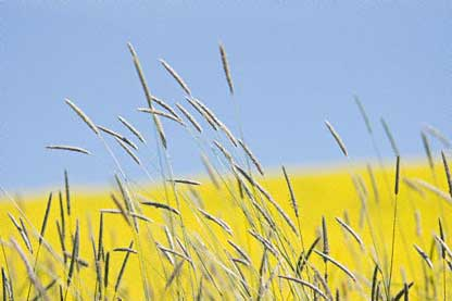 Blue and Yellow in the Palouse