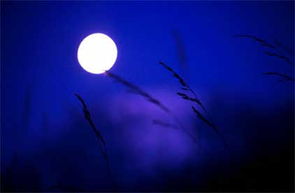 Moon Through Grasses